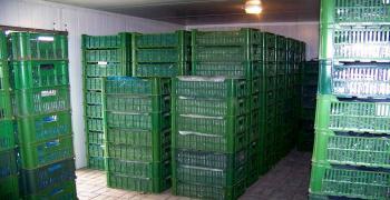 Хранение рассады клубники (земляники) фриго в холодильной камере