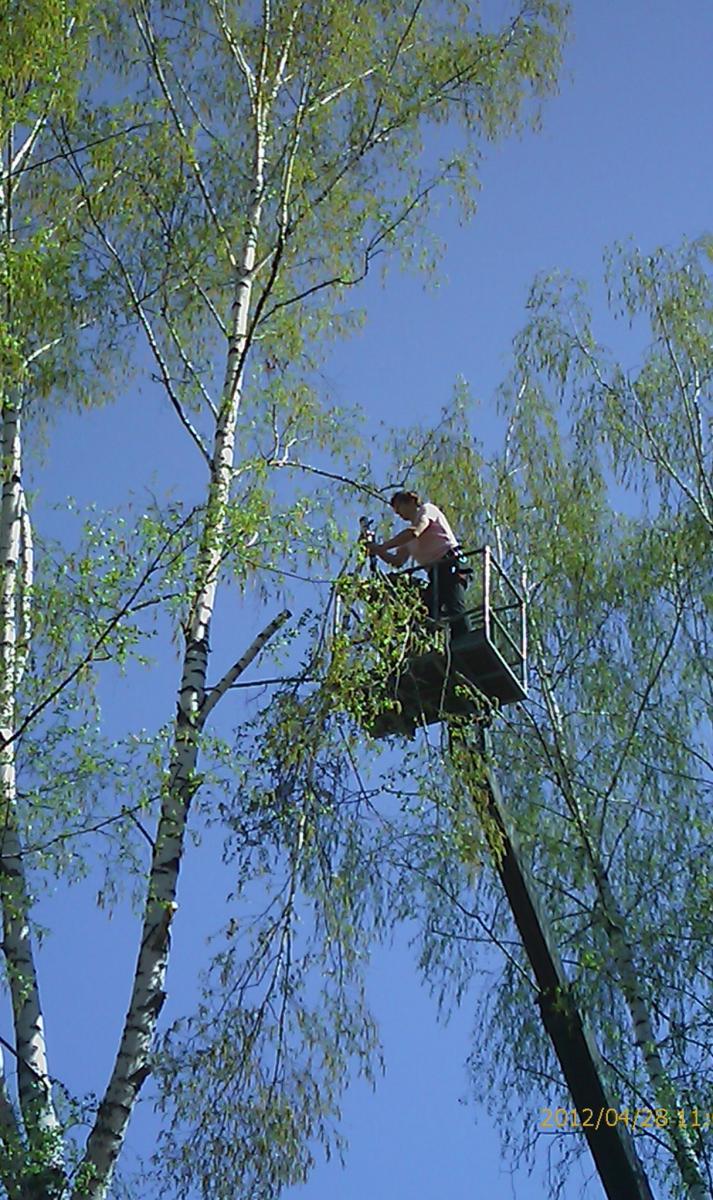Спилить удалить дерево цена